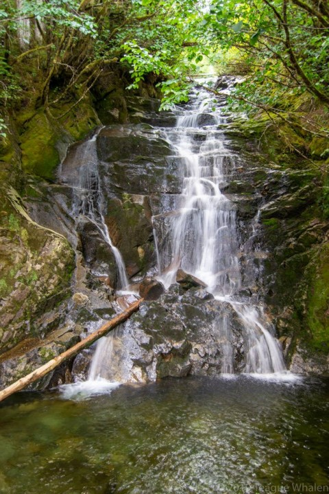 Step up a few boulders to gain a full view of the Tongass Waterfall emptying into a pool 30-feet directly below you.