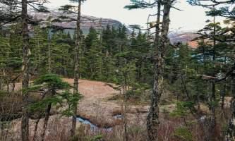 Emerald Cove Trail 1 alaska untitled