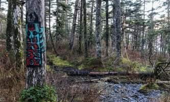 Emerald Cove Trail 2 alaska untitled