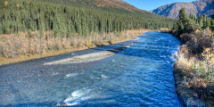 Upper Teklanika / Sanctuary River - Look for Dall Sheep & Bears (Mile 22)