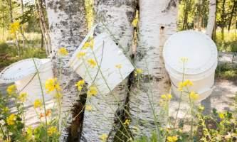 Alaska Birch Works 28 kahiltna birch works