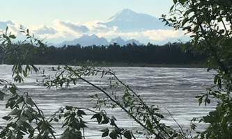 Alaska IMG 6384 kahiltna birch works