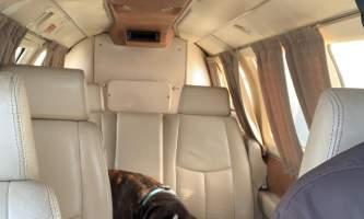 Natron Air Charter Flights Dog alaska untitled