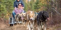 Trip Ideas Willow Alaskan Husky Adventures Liz Failor Summer Sled Ride