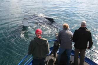 Alaska trip ideas whittier whalewaving 2014